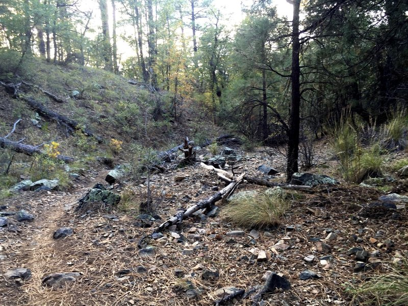 Follow the trail through the creek