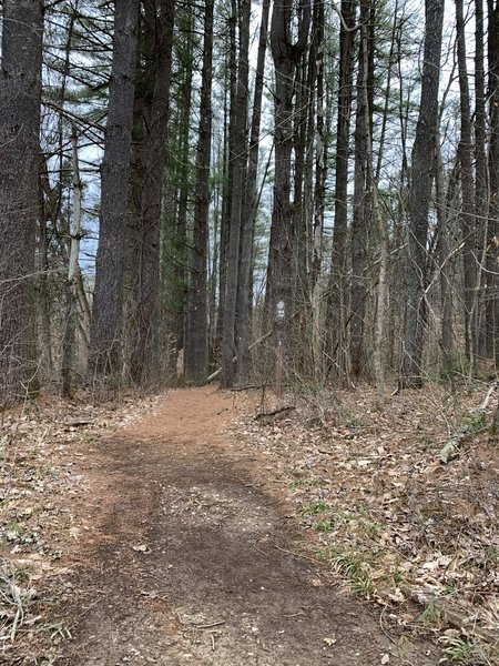 Early springtime on Jackson Creek Trail in Yellowwood State Forest