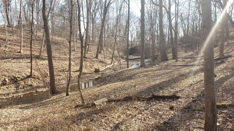 Fiddler's Creek ravine looking toward the South Bank Trail