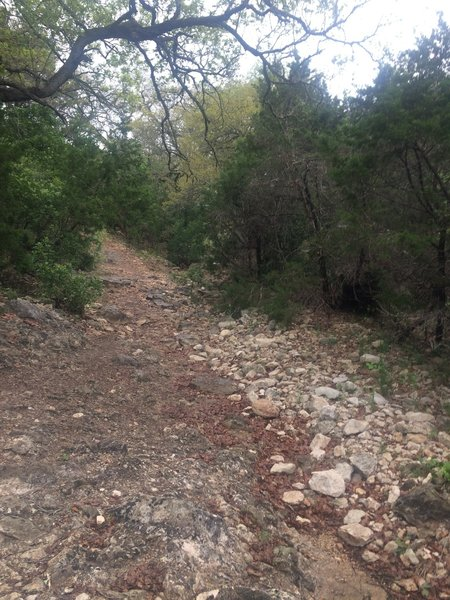 Dry creekbed along Wildcat Canyon Trail