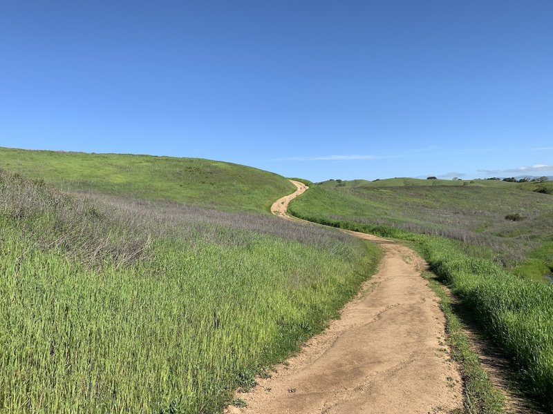 Leisurely hill climb on the west side of the loop heading toward Calero Reservoir. On a warm day, the open terrain makes you appreciate your bottle of water.
