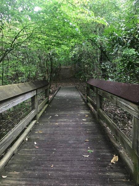 Backbone Ridge Trail