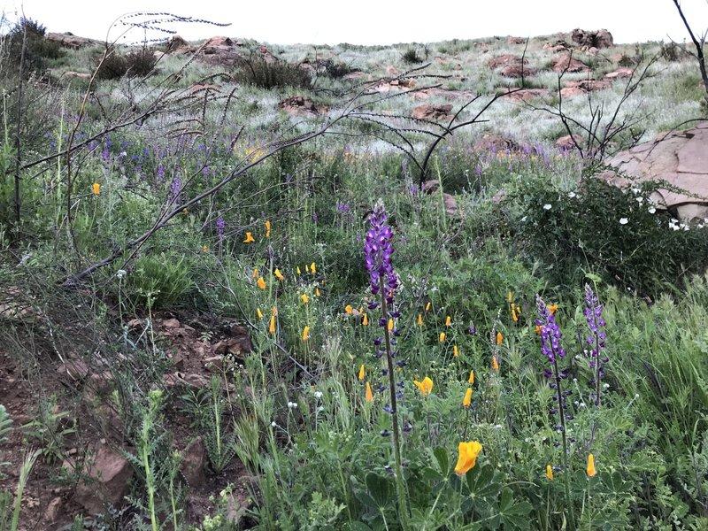 Fields of wild flowers in bloom