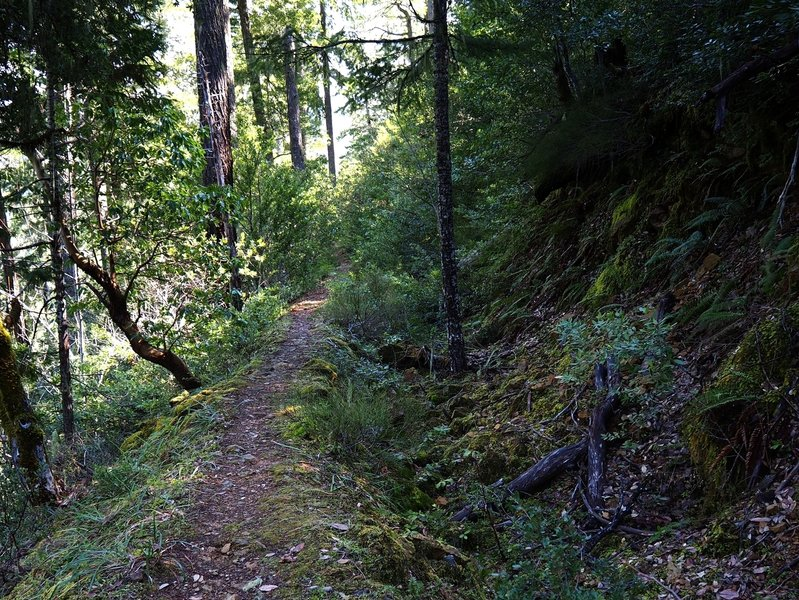 The trail (L) and ditch (R) just south of Bybee Gulch