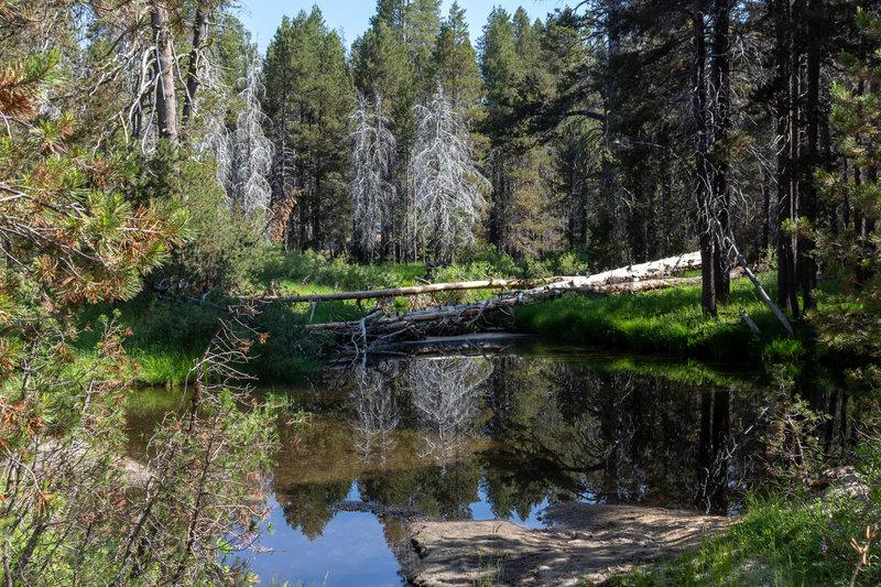 Small pond fed by Bridalveil Creek right next to the Bridalveil Creek Trailhead