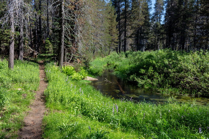 The trail stays close to Bridalveil Creek for the first half mile