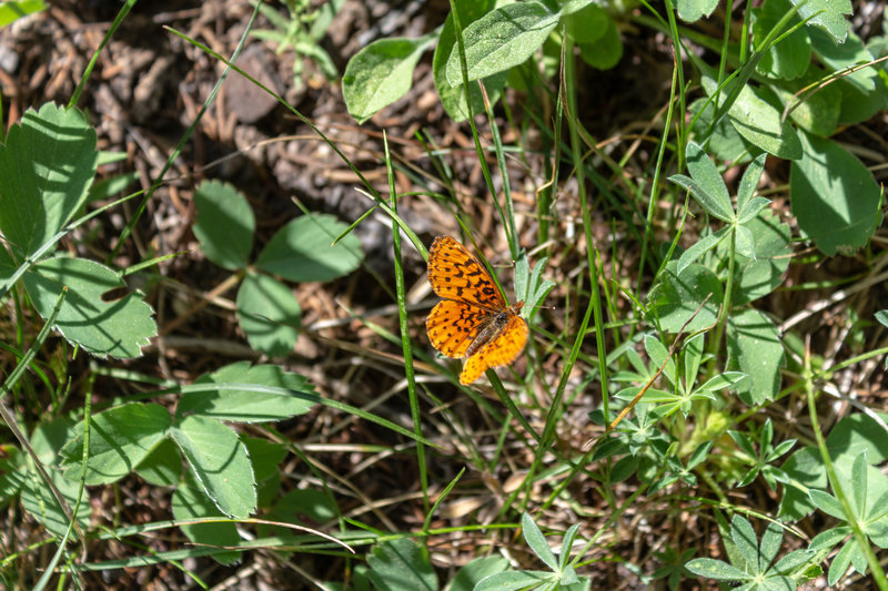 The wildflowers that bloom in late spring and early summer attract a lot of butterflies.