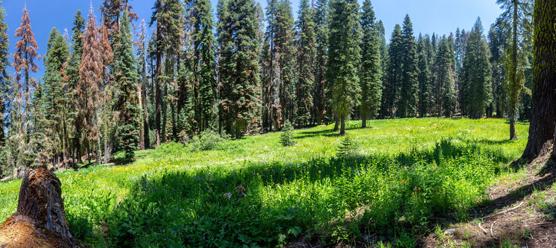 A big wildflowers meadow is right before the junction to Deer Camp.