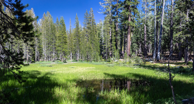 Green swampy meadows along the Chilnualna Creek Trail