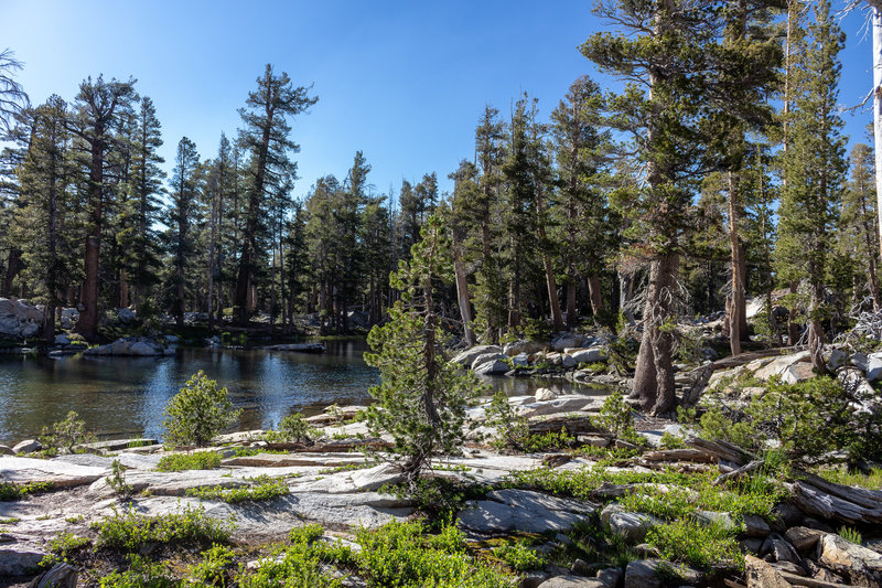 The outlet of Buena Vista Lake feeding Buena Vista Creek