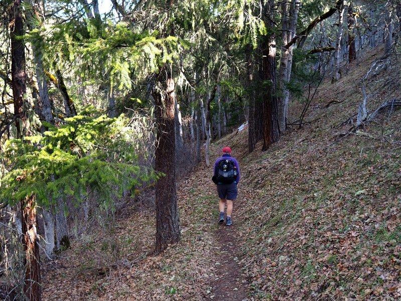 Starting up the Bear Gulch Trail