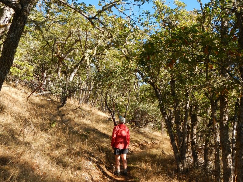 Ascending the trail through stands of oaks