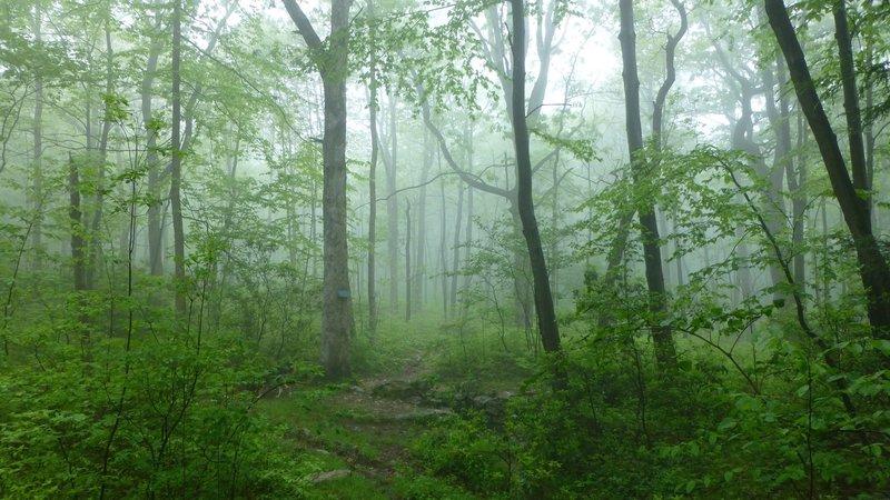 Foggy day along trail.