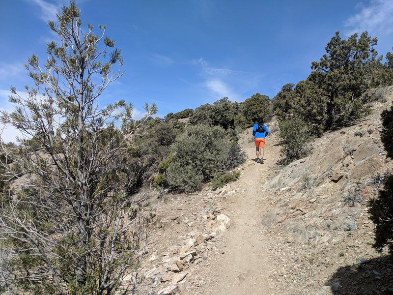 Pinyon Trail singletrack