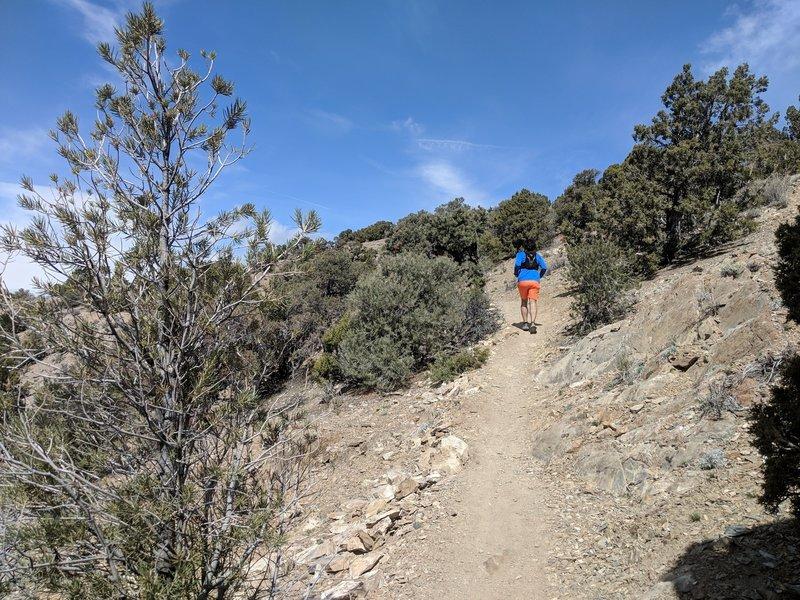 Pinyon Trail singletrack