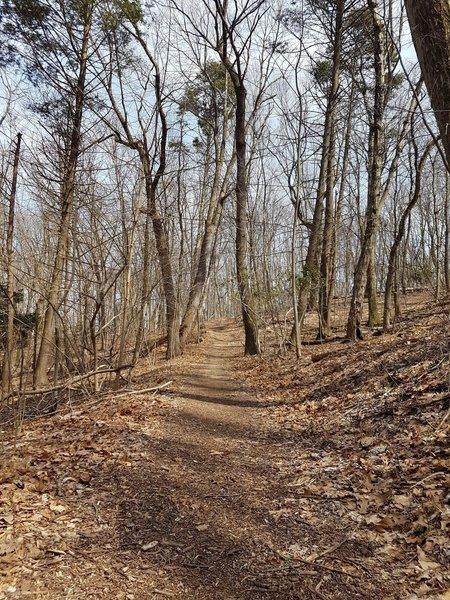 Red Trail Terrain