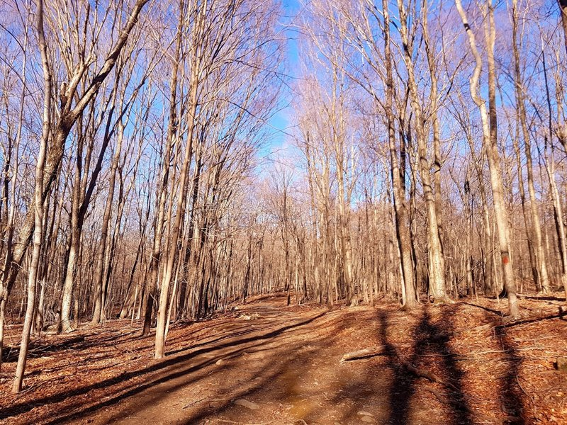 Red Trail at Racebrook Tract