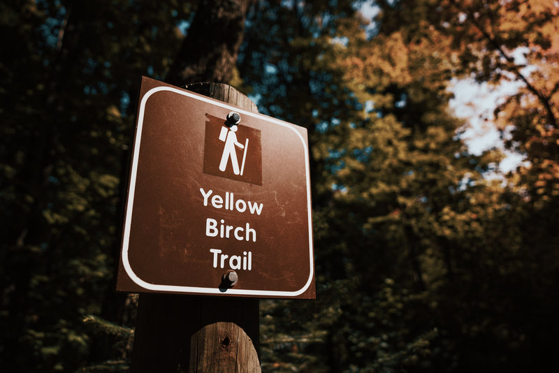 Yellow Birch Trail at George H. Crosby Manitou State Park, Minne
