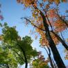 Fall Colors on Minnesota's North Shore