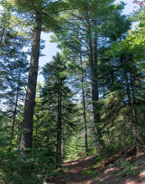 Hiking Trail on Minnesota's North Shore