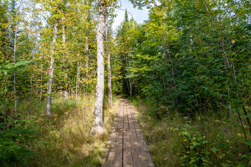 Boardwalk through the Forest - North Shore, Minnesota