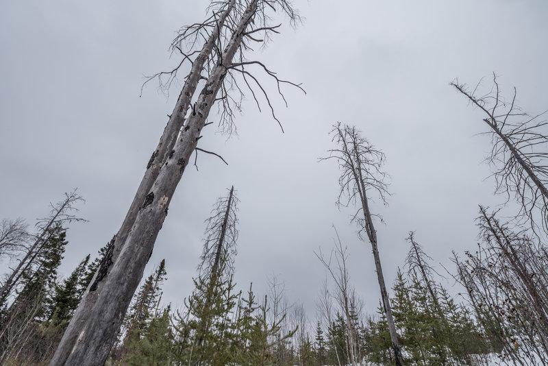 Magnetic Rock Trail in Winter, Minnesota