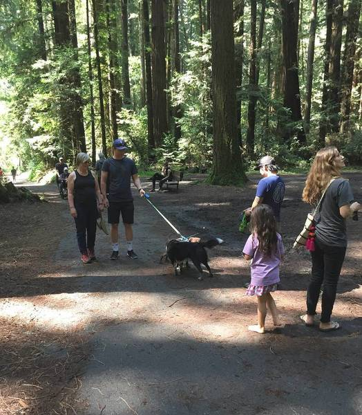 The Pipeline Trail is family and dog-friendly. It follows the San Lorenzo River, then heads uphill through a redwood grove.