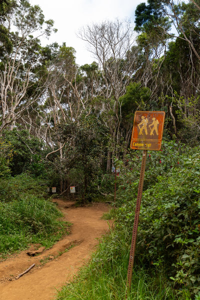 Kauai trail hike Hawaii