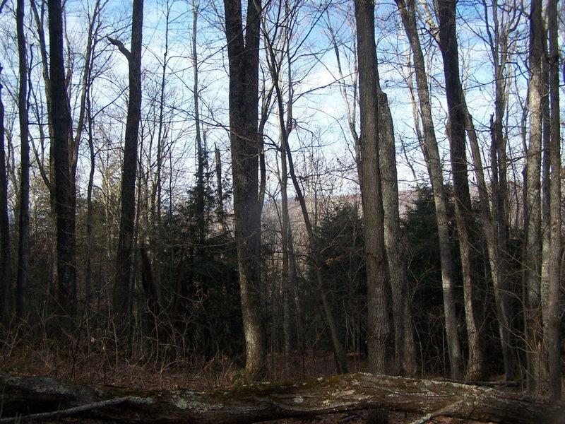 Looking Down Elm Ridge