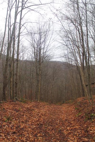 Old Woods Road to Huggins Lake