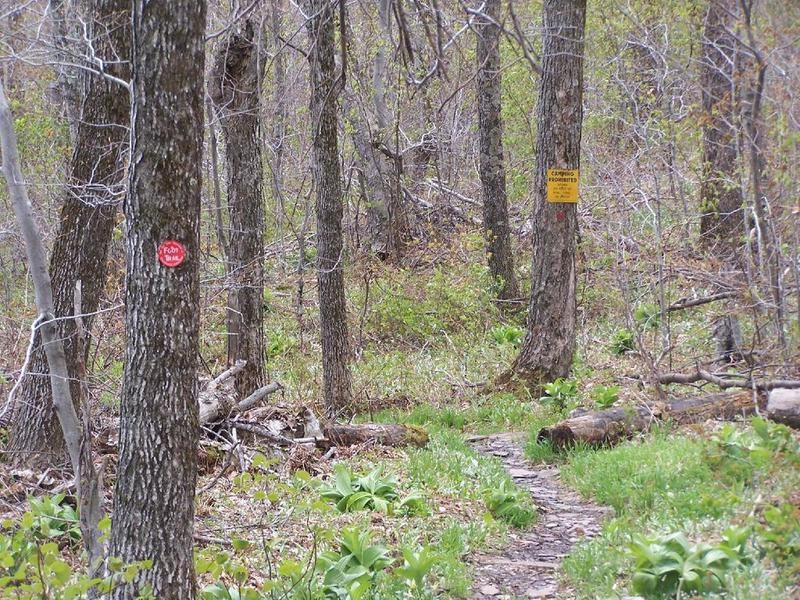 Below 3500, Camping Prohibited Near Trail