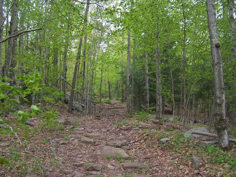 Old Woods Road