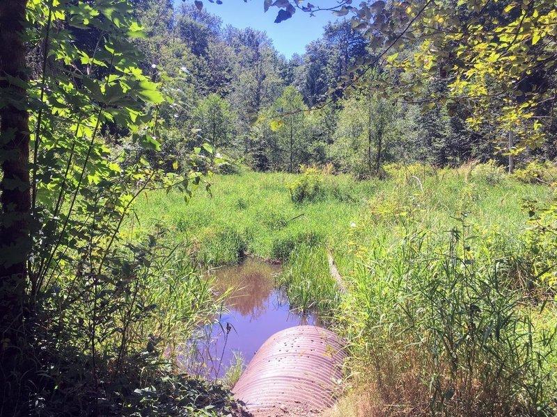 A small creek along the Camino Espantoso trail.