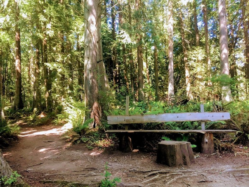 A nice bench on the Cedar Chip Trail.