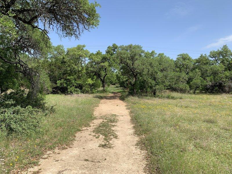Start of the Live Oak Trail
