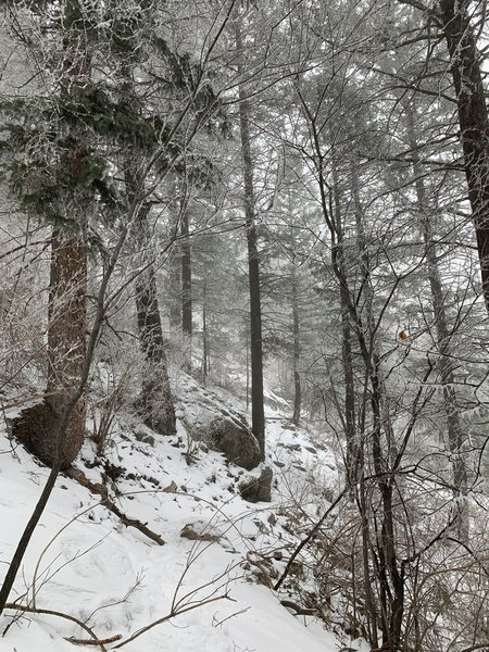 Snowy conditions on trail.