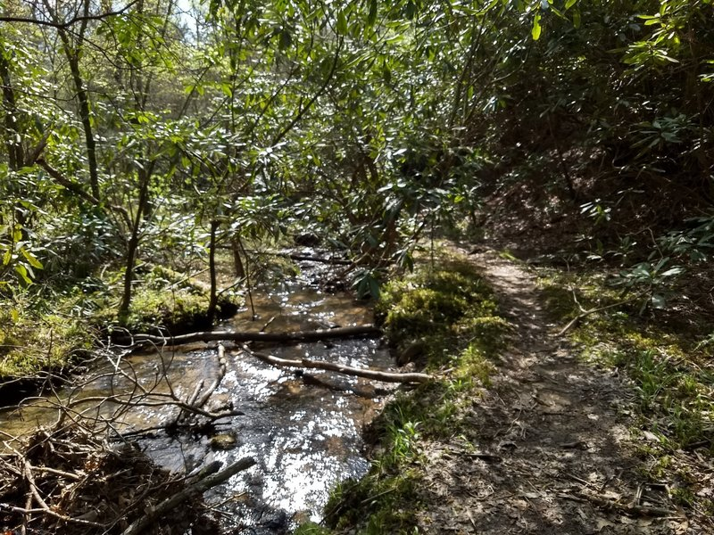 A lot of the Old Settlers Trail is located along—and often across—streams varying in size from small brooks, like this, and large, hazardous rivers.