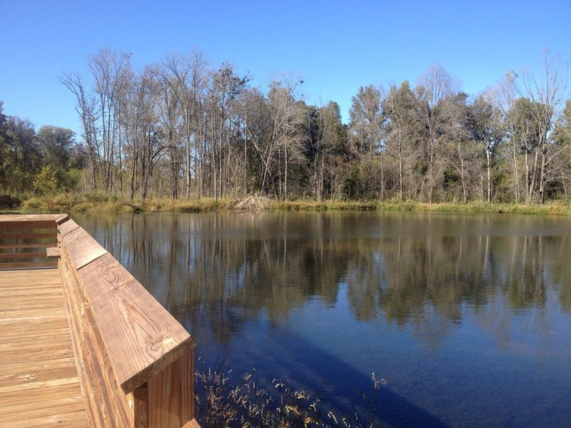 Observation Deck at Hector H. Henry II Greenway (Moss Creek)