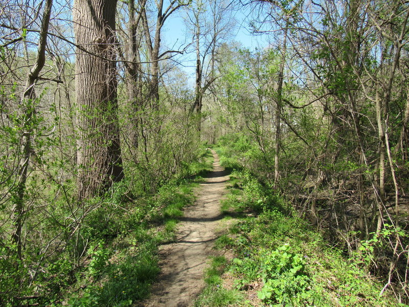View down Mill Race Trail.