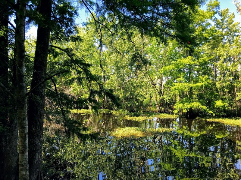 Calm waters of the bayou