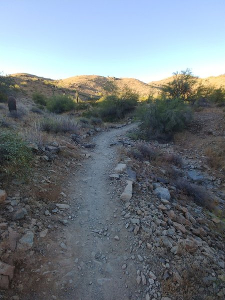 The hike gradually gets steeper as you head up toward Ridgeline. I saw a few mountain bikers and hikers but the trail is far less crowded than the Mormon Trail.