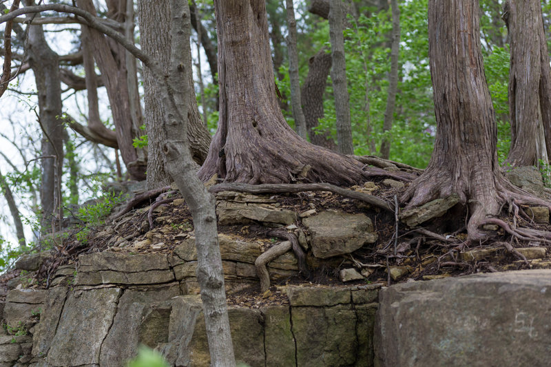 cool rock/tree formation