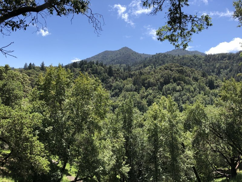View of Mt. Tam