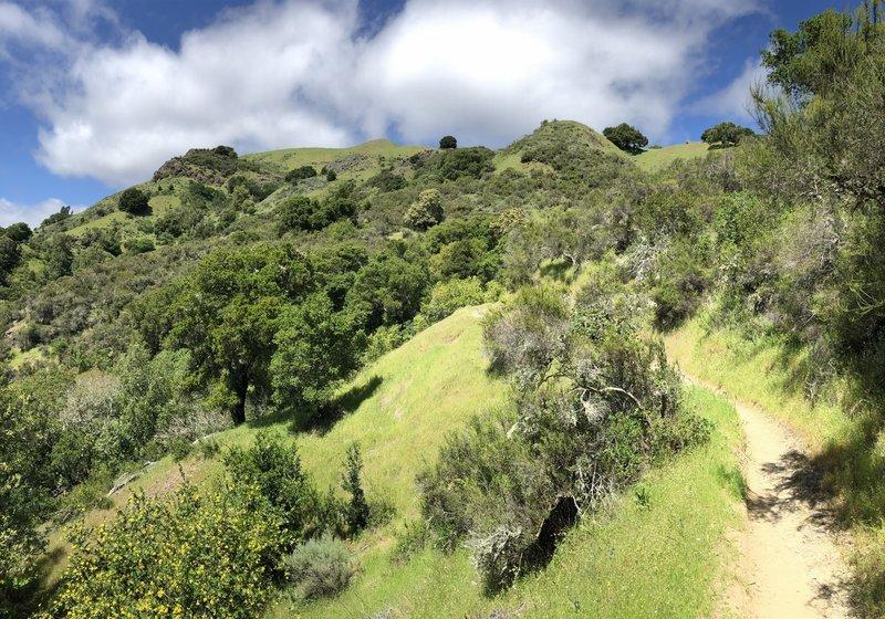 View toward hilltop from Yolanda Trail