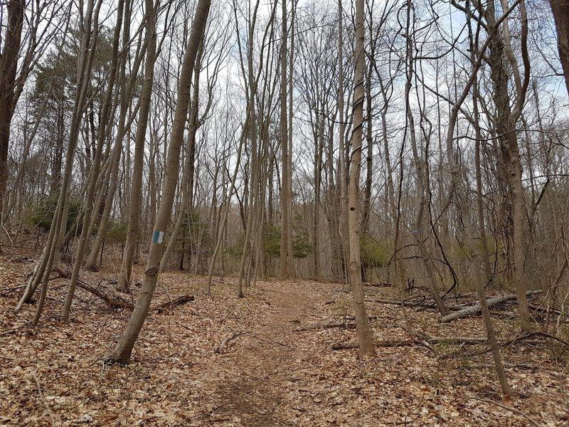 Blue and White Trail at Solomon Woods