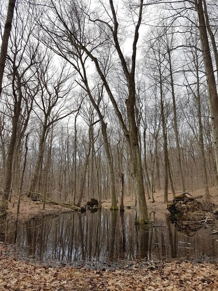 Wetlands at Solomon Woods