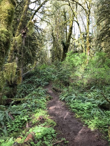 Most of the trail is this type of 1.5 track