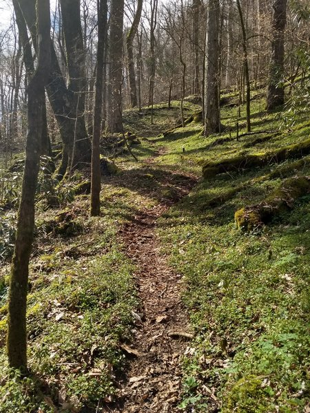 Just up from the Deep Creek crossing, the beauty of the trail contrasts the difficulty of the climb, which is as steep as it gets along the entirety of the trail along this section.