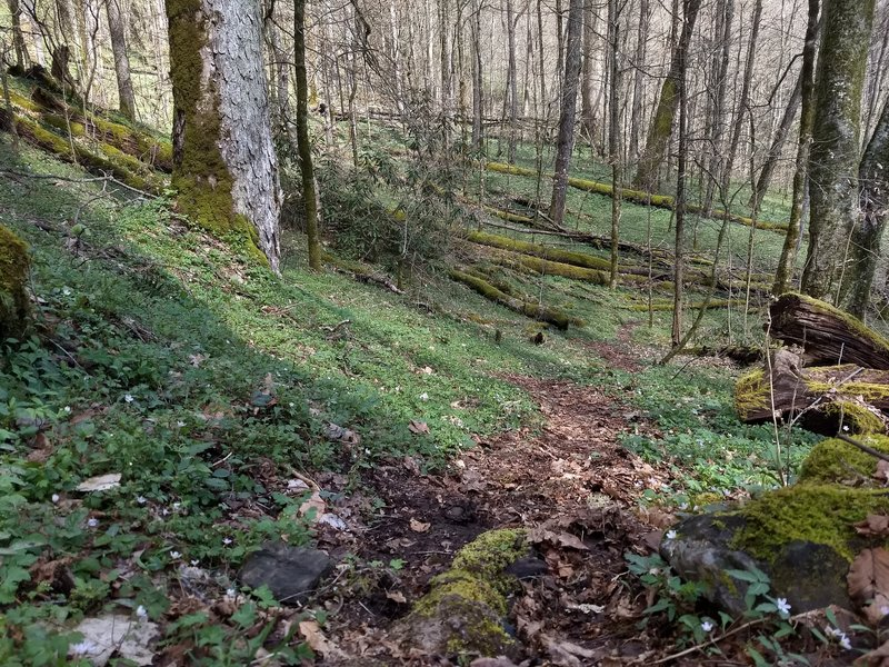 The wonders of an early Spring morning near the Deep Creek end of the Fork Ridge Trail