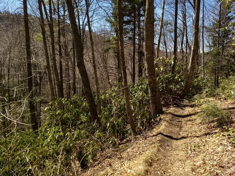 Goshen Prong Trail a few miles down from the terminus with the Appalachian Trail